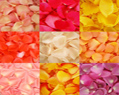 Assorted Colors Fresh Rose Petals for Wedding 250
