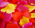 Yellow Red Hot Pink Fresh Rose Petals Wedding 500