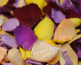 Tropical Mix Freeze Dried Rose Petals Wedding Small Case 8 cups