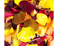 Fall Mix Freeze Dried Rose Petals Wedding Large Case 64 cups